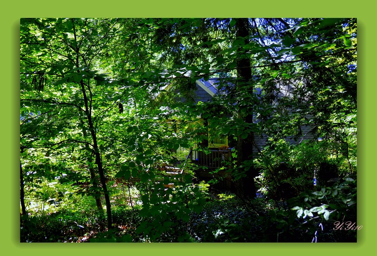 【原创】在绿色植物的围绕中(摄影)_图1-6