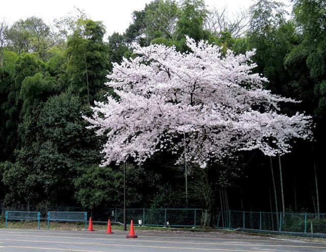 京都行之......伏见桃山城_图1-5