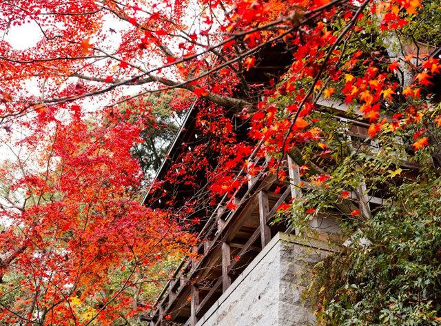 京都行之......南禅寺_图1-25