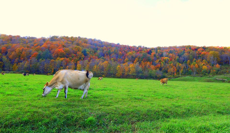 【原创摄影】Vermont West Dover 之行(2)_图1-9