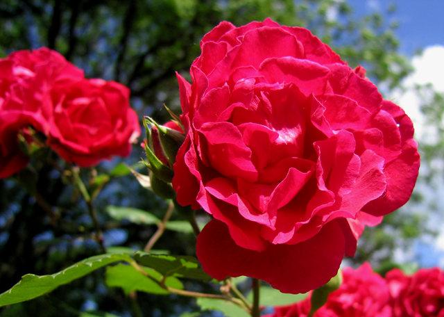 银湖拍玫瑰_图1-9
