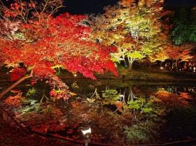 京都行之......大觉寺夜拍红叶