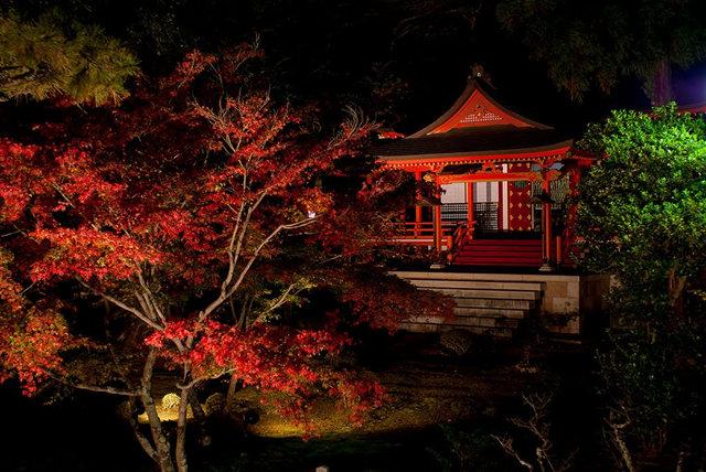 京都行之......大觉寺夜拍红叶_图1-9