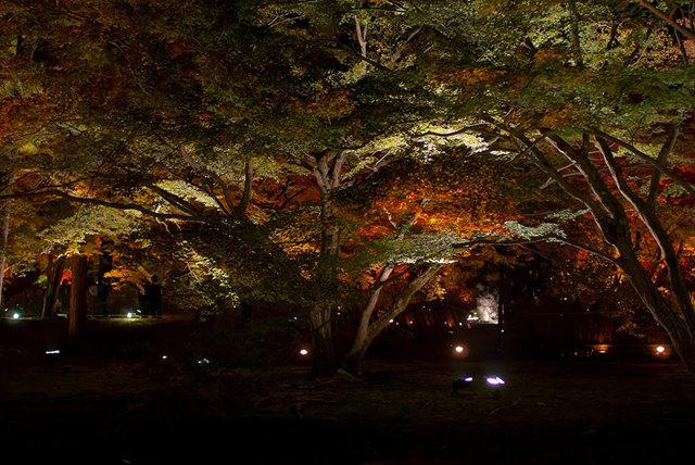 京都行之......大觉寺夜拍红叶_图1-21