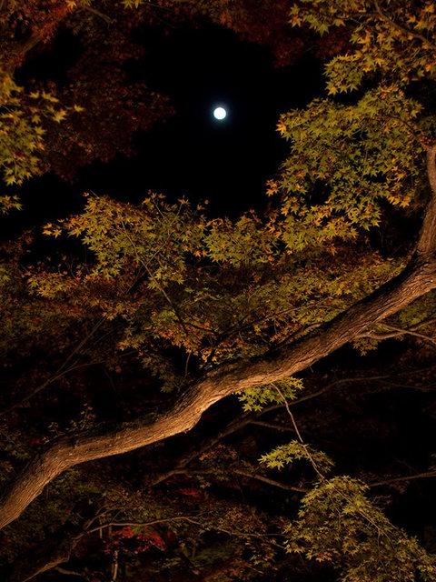 京都行之......大觉寺夜拍红叶_图1-23
