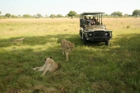 博茨瓦纳狮子保护园