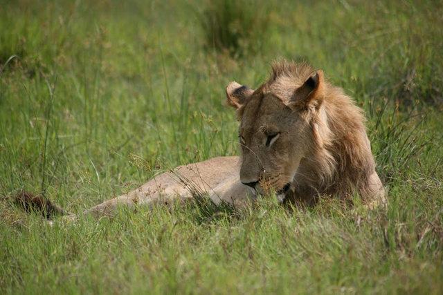 博茨瓦纳狮子保护园_图1-10