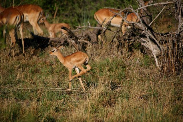 博茨瓦纳狮子保护园_图1-18
