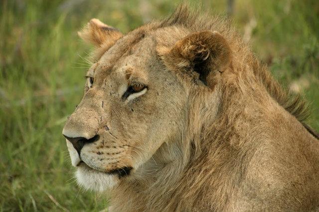博茨瓦纳狮子保护园_图1-20