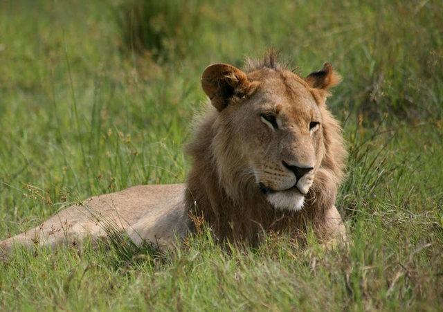 博茨瓦纳狮子保护园_图1-28