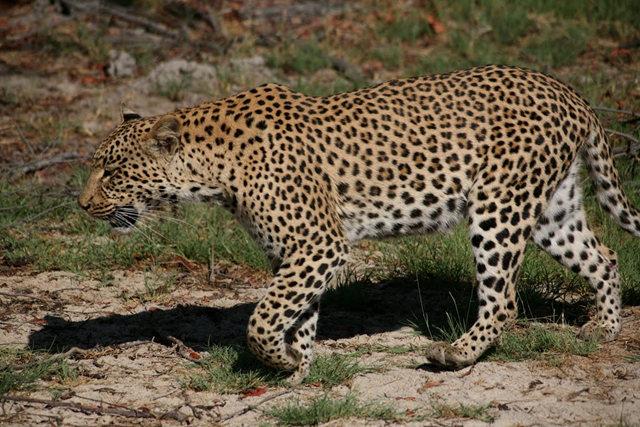 博茨瓦纳狮子保护园_图1-31