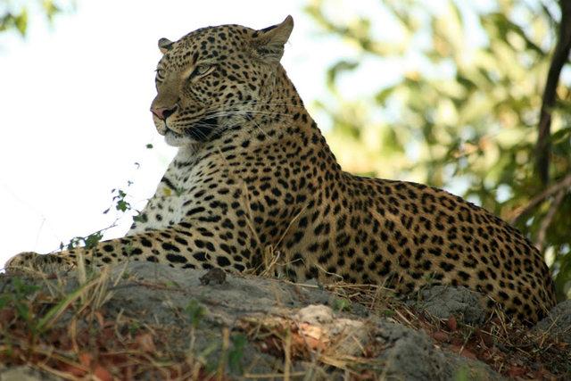 博茨瓦纳狮子保护园_图1-32