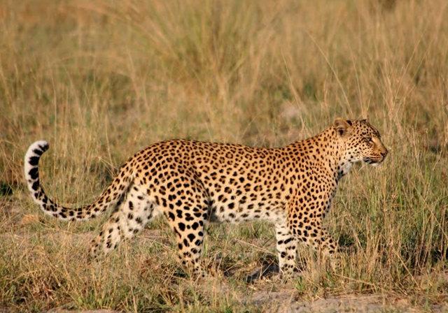 博茨瓦纳狮子保护园_图1-35
