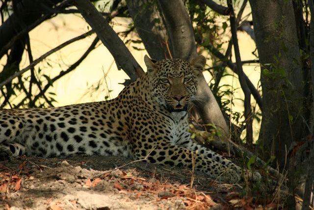 博茨瓦纳狮子保护园_图1-36