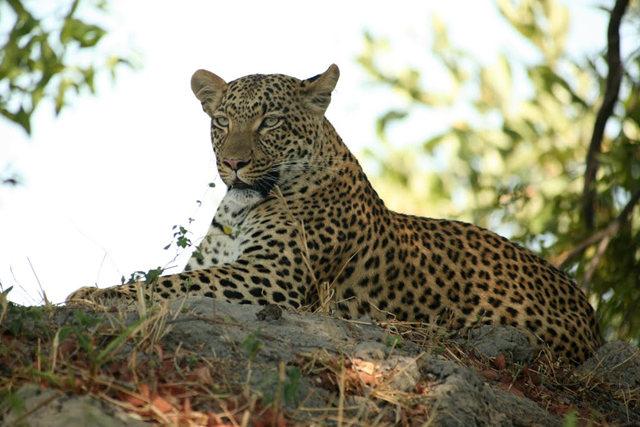 博茨瓦纳狮子保护园_图1-38