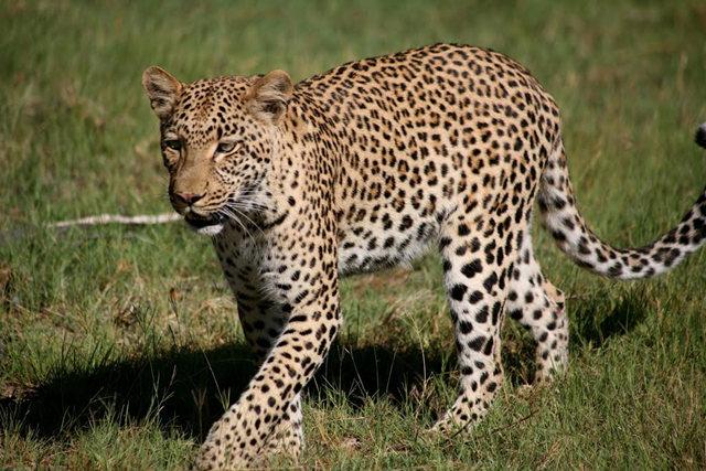 博茨瓦纳狮子保护园_图1-40
