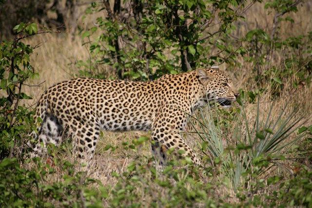 博茨瓦纳狮子保护园_图1-42