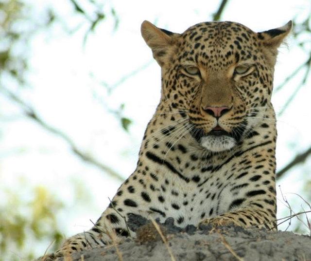 博茨瓦纳狮子保护园_图1-44