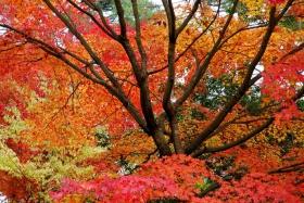 红叶与黄叶
