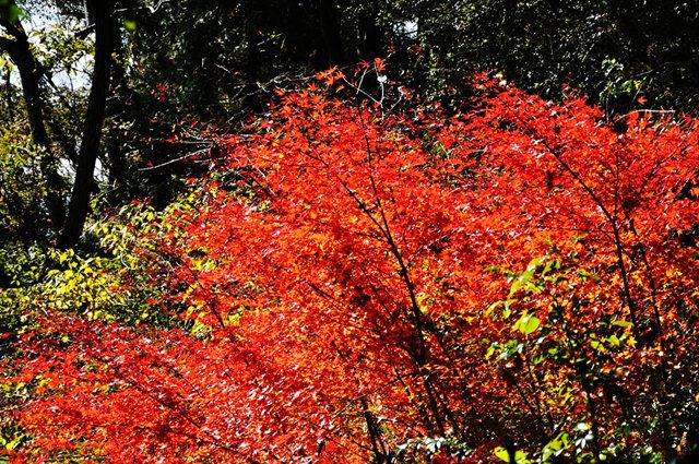 红叶与黄叶_图1-6