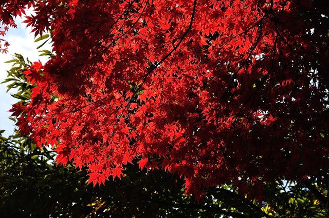 红叶与黄叶_图1-14