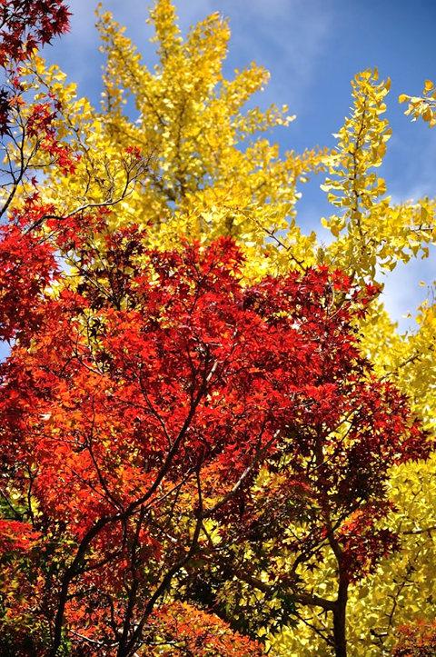 红叶与黄叶_图1-16