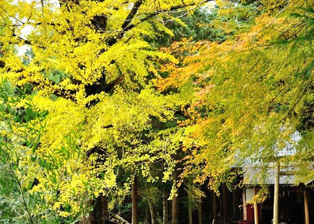 红叶与黄叶_图1-18