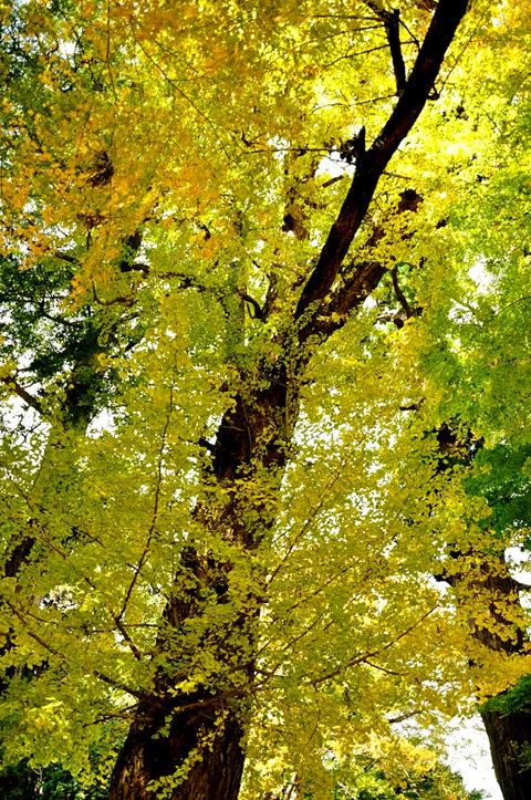 红叶与黄叶_图1-22
