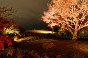 京都行之......青龙殿夜拍红叶