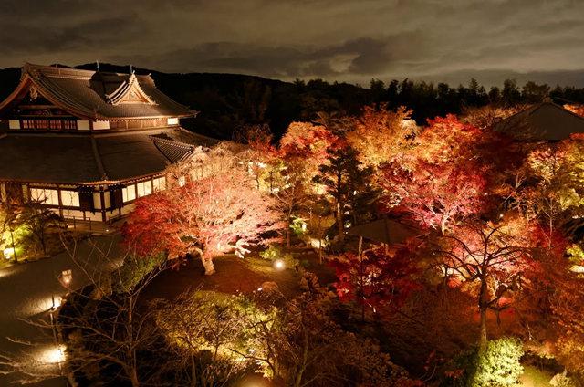 京都行之......青龙殿夜拍红叶_图1-6