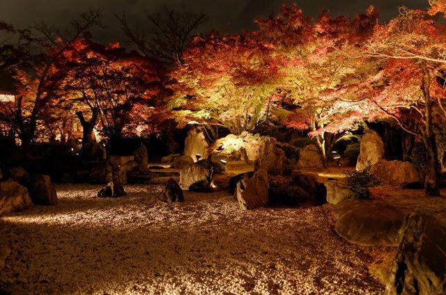 京都行之......青龙殿夜拍红叶_图1-7