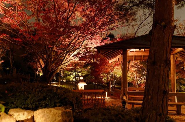 京都行之......青龙殿夜拍红叶_图1-8