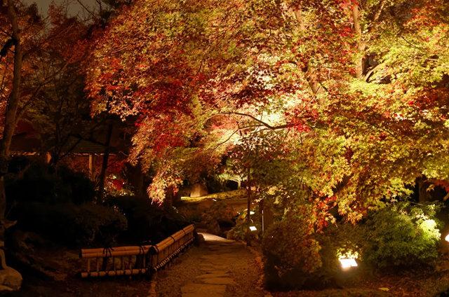 京都行之......青龙殿夜拍红叶_图1-9