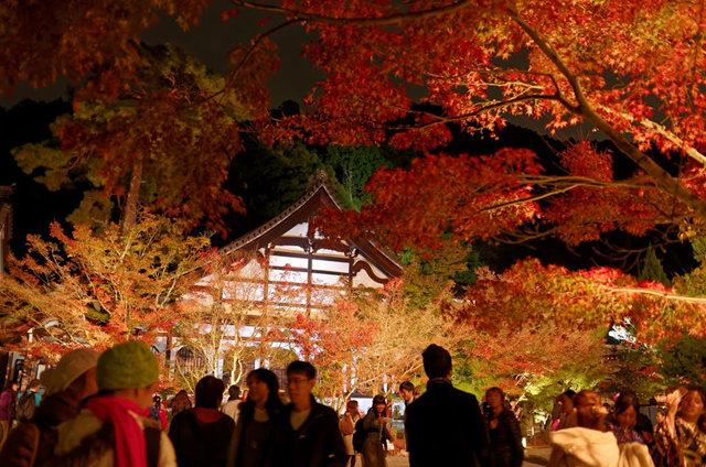 京都行之......青龙殿夜拍红叶_图1-10