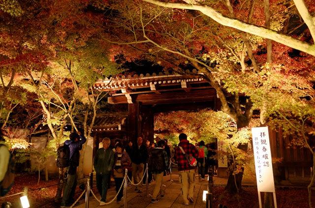 京都行之......青龙殿夜拍红叶_图1-11