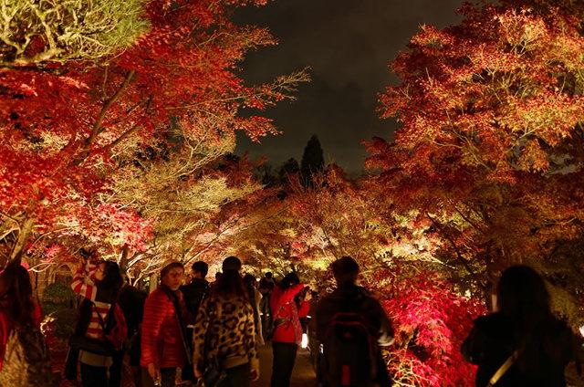 京都行之......青龙殿夜拍红叶_图1-14