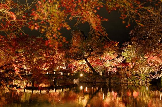 京都行之......青龙殿夜拍红叶_图1-15