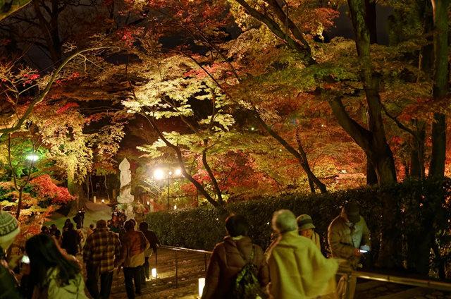 京都行之......青龙殿夜拍红叶_图1-17