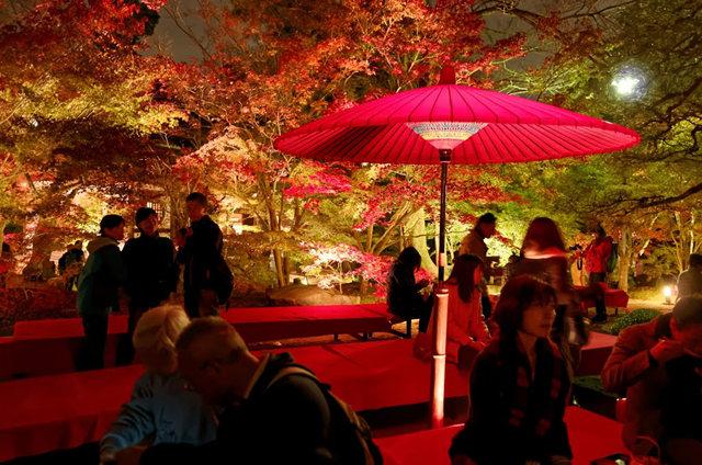 京都行之......青龙殿夜拍红叶_图1-18