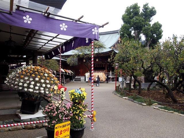 心城院 菊花 小龟过桥_图1-5