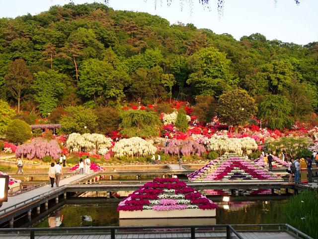 足利花卉公园看紫藤_图1-3