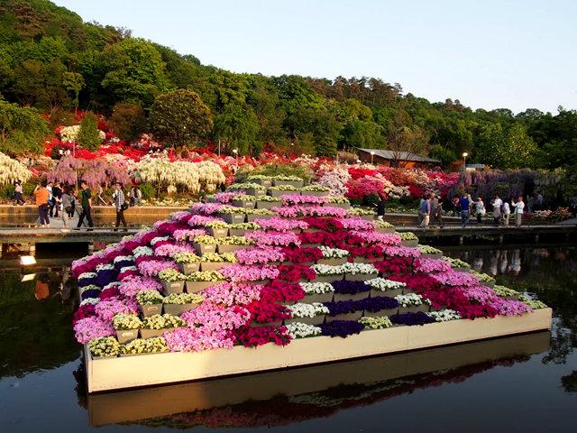 足利花卉公园看紫藤_图1-11