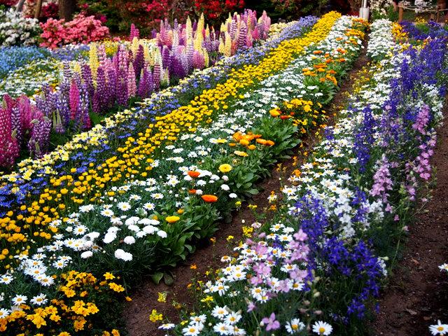 足利花卉公园看紫藤_图1-25
