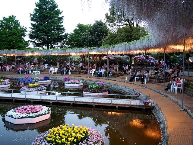 足利花卉公园看紫藤_图1-29