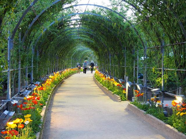 足利花卉公园看紫藤_图1-40