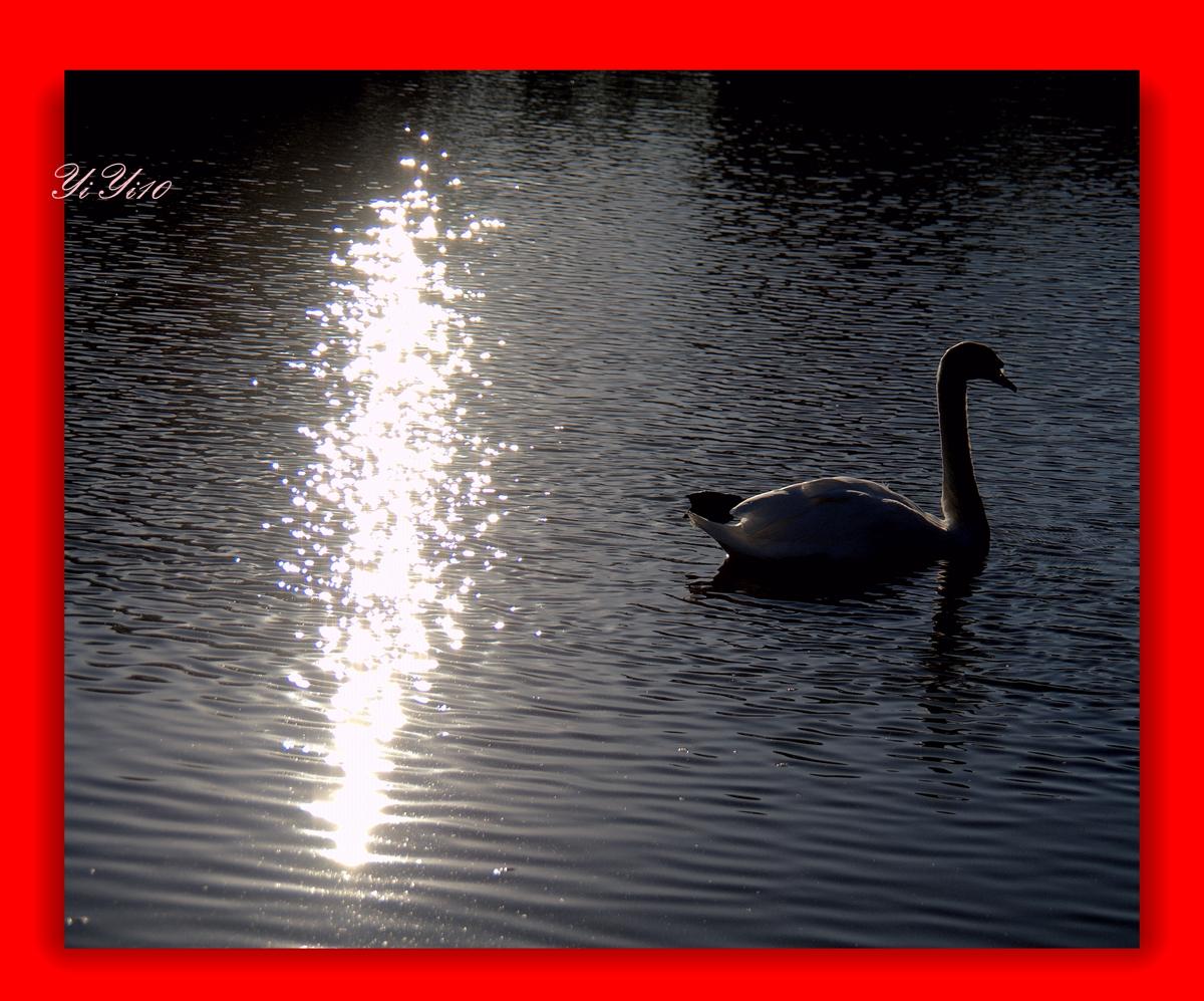 【原创】水上的小朋友们(摄影)_图1-12