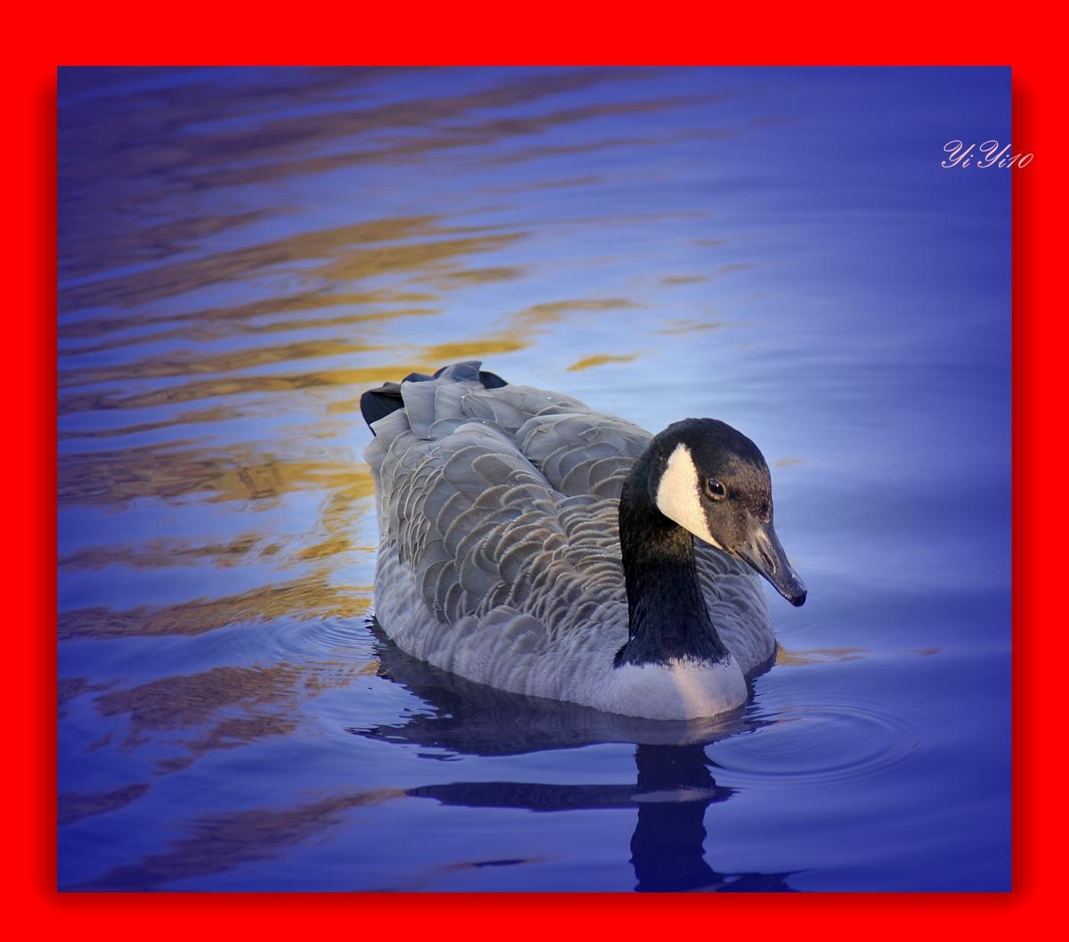 【原创】水上的小朋友们(摄影)_图1-7