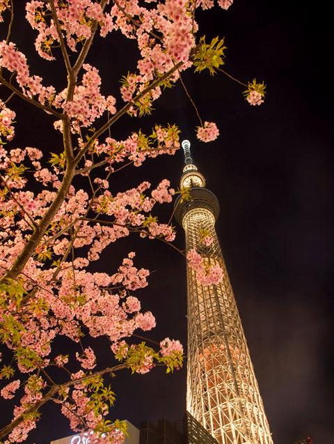 夜拍天空树_图1-2