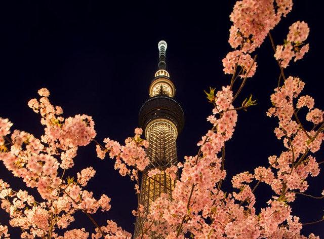 夜拍天空树_图1-4