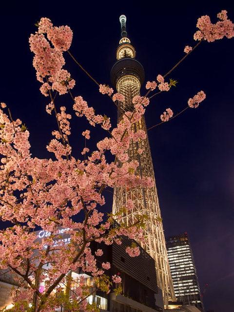 夜拍天空树_图1-5